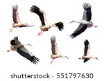 Flying Stork (Ciconia ciconia) isolated on white background - stock photo