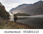 Beautiful Red Deer Stag Looks...