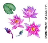 watercolor hand painted lotus... | Shutterstock . vector #551830444