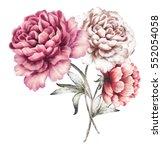 pink peonies. watercolor... | Shutterstock . vector #552054058