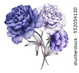 blue peonies. watercolor... | Shutterstock . vector #552054130