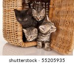Stock photo four kittens in a picnic basket 55205935