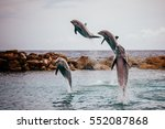 for dolphins jumping out of the ... | Shutterstock . vector #552087868