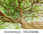 the trunk of the tree with... | Shutterstock . vector #552106486