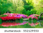beautiful flowers and their... | Shutterstock . vector #552129553
