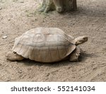 Tortoise Walking On Floor