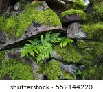 Stone Wall Covered With Moss...