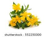 st. john's wort  hypericum... | Shutterstock . vector #552250300