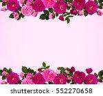 frame of pink roses  shrub rose ... | Shutterstock . vector #552270658
