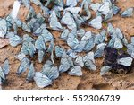 Many White Butterflies On Sand