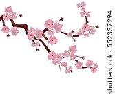 japanese cherry tree. a branch... | Shutterstock . vector #552337294