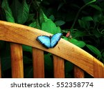 Blue Butterfly On A Wood Bench...