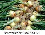 Harvest Of Onion