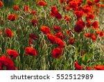 poppy field pattern background | Shutterstock . vector #552512989