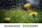 Abstract Photography   A Meado...