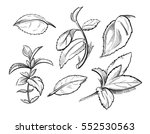 mint  medicine herb peppermint... | Shutterstock .eps vector #552530563