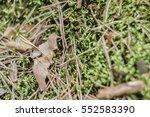 background blurred green grass... | Shutterstock . vector #552583390
