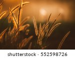 Grass Flower In Sunset  Vintage ...