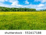 Spring Landscape Of Field With...