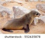 baby brown fur seal ... | Shutterstock . vector #552635878