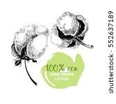 hand drawn set of cotton... | Shutterstock . vector #552637189
