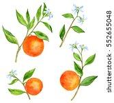set of orange tree branches... | Shutterstock . vector #552655048