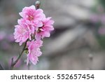 Close Up Peach Blossoms Pink...