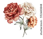 red peonies. watercolor flowers....   Shutterstock . vector #552683848