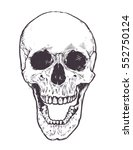 anatomic skull vector art.... | Shutterstock .eps vector #552750124
