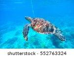 sea turtle in water. green... | Shutterstock . vector #552763324