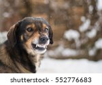angry  dog shows teeth. pets....   Shutterstock . vector #552776683