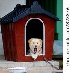 yawning dog | Shutterstock . vector #552828376