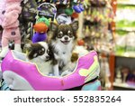 Stock photo chihuahua dog in pet store 552835264