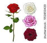 pink  white  deep red open rose ... | Shutterstock .eps vector #552853420