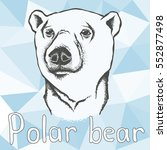 polar bear vector illustration. ... | Shutterstock .eps vector #552877498