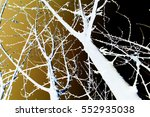 abstraction  white tree... | Shutterstock . vector #552935038