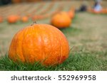 Orange Pumpkin On The Green...