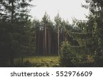 natural green pine forest | Shutterstock . vector #552976609