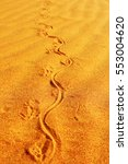 Tracks Of A Monitor Lizard In...