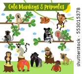 Cute Monkey And Primate Animal...