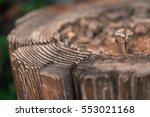 Surface Dilapidated Stump