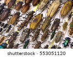 collection of beetle with pin.... | Shutterstock . vector #553051120