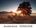 summer sunrise over flowering... | Shutterstock . vector #553061968