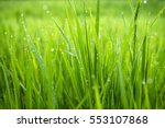 Macro Photo Of Green Grass In...
