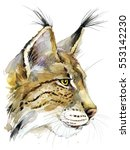 lynx  watercolor illustration.... | Shutterstock . vector #553142230