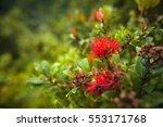 Ohio Lehua Hawaiian Flower....
