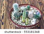 cactus wood  small garden... | Shutterstock . vector #553181368