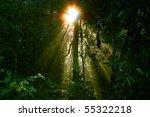 Beautiful Rain Forest At Doi...