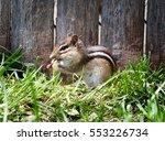 Wild Chipmunk Eating Seeds In...