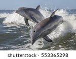 bottlenose dolphin    tursiops...   Shutterstock . vector #553365298